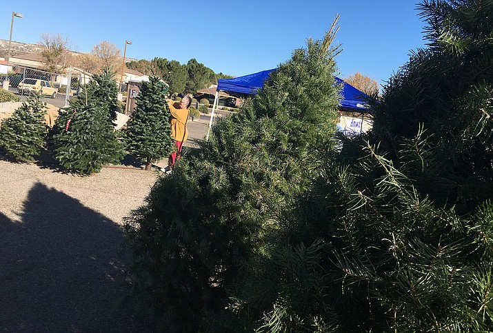 Pat Schultz tags one of the more than 150 remaining Christmas trees the Camp Verde Kiwanis hope to sell by Dec. 23. (Photo by Bill Helm)