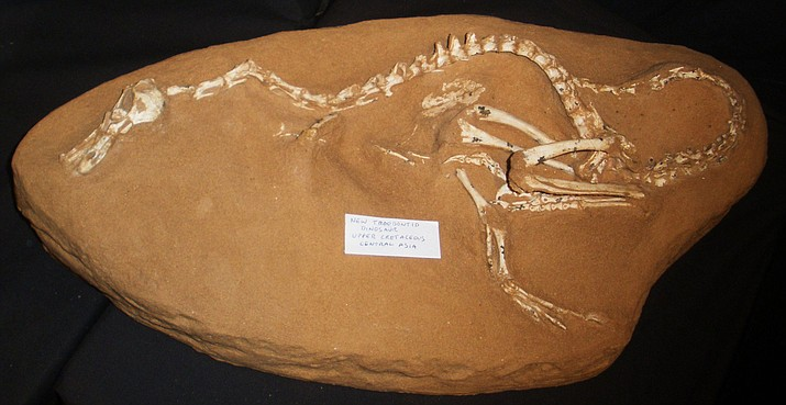Fossil of a Halszkaraptor, originally thought to be an example of a troodontid.