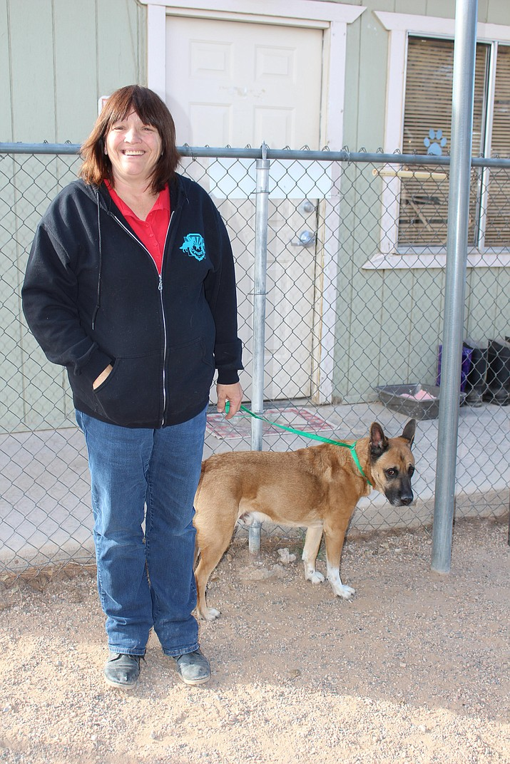 Lisa Snyder, manager of Mohave County animal shelter operated by Western Arizona Humane Society, brought out Ace, a 7-year-old male, as an example of older dogs available for adoption this Christmas.