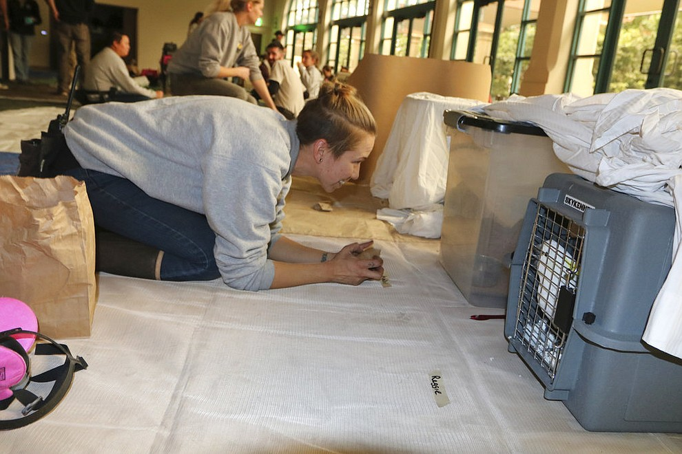 "In this photo provided by the Santa Barbara Zoo, bird keeper Ashley Darling checks on a lesser Sulphur crested cockatoo named ""Reggie"" in Santa Barbara, Calif., on Saturday, Dec. 16, 2017. Thr zoo, which is near the mandatory evacuation zone, announced it was putting some animals in crates to prepare for possible evacuation. Workers began putting vultures, California condors and some smaller animals into crates and kennels in case the fire approached. (Dean Noble/Santa Barbara Zoo via AP)"