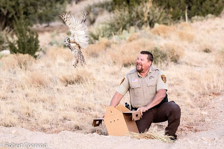 A Great Horned Owl that was trapped in a barbed wire fence in the Ash Fork area was released Dec. 8 after months of rehabilitation. (Photos courtesy of YCSO)