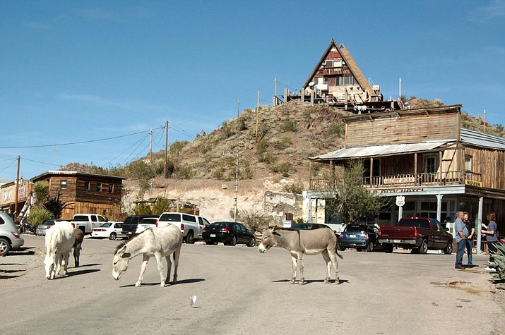 Burros wander the streets of Oatman, an old mining town in Mohave County, about an hour's drive from Lake Havasu City.