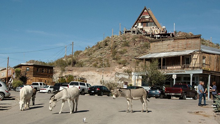 Burro's shooting death prompts investigation, outrage
