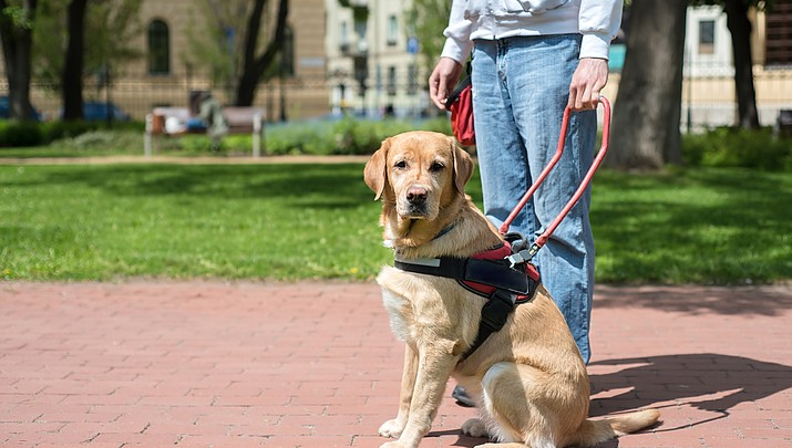 Are pet owners abusing service animal privileges?