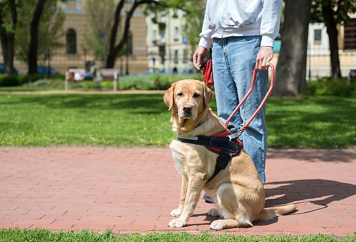 A Republican state senator wants to make it illegal to misrepresent a dog as a service animal and bring it into places where pets are not allowed.