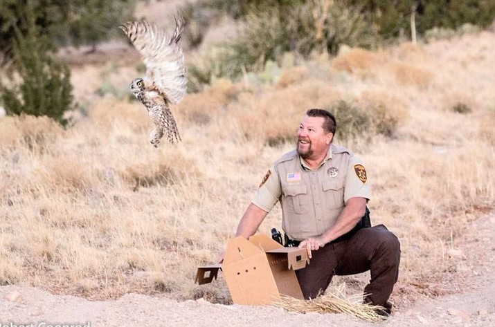 Yavapai Country Sheriff's Deputy Ted Bumstead releases a Great Horned Owl he found trapped in a fence  in Ash Fork Dec. 8.