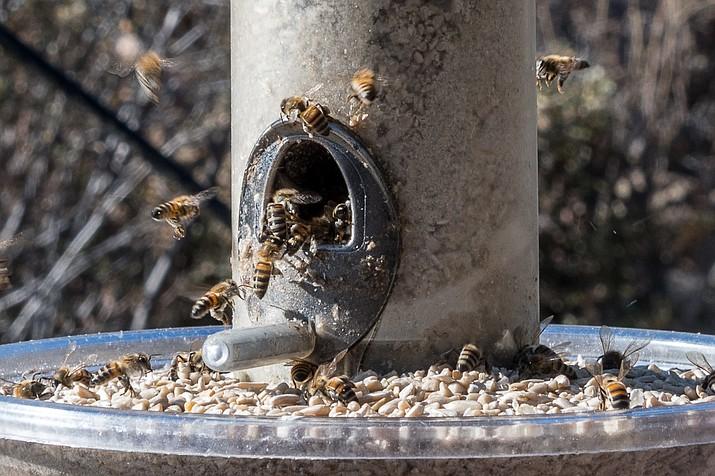 Bees at feeder