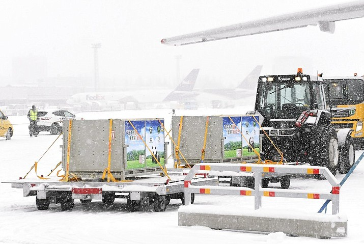 Giant pandas, male Hua Bao (in Finnish Pyry) and female Jin Bao Bao (in Finnish Lumi), arrive to Helsinki-Vantaa airport in Vantaa, Finland on Thursday January 18, 2018. (Markku Ulander/ Lehtikuva via AP)