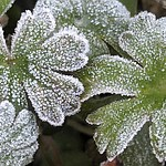 Frost covers plants in Palm Harbor, Fla., where the temperature fell to 25 degrees Fahrenheit at daybreak on Thursday, Jan. 18, 2018. (Douglas R. Clifford/Tampa Bay Times via AP)