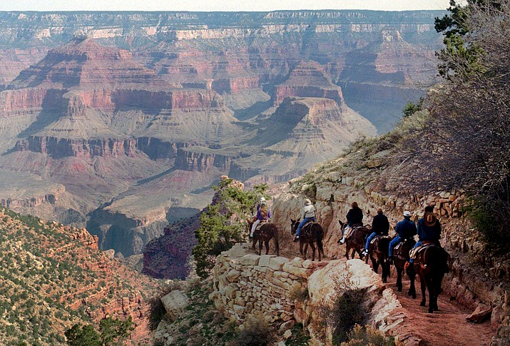 A mule train winds its way down the Bright Angel trail at Grand Canyon National Park, Ariz., in 1996.