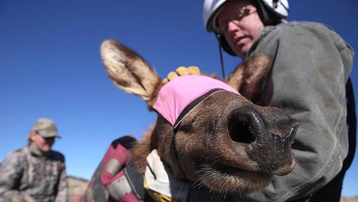 Arizona aids West Virginia elk restoration efforts