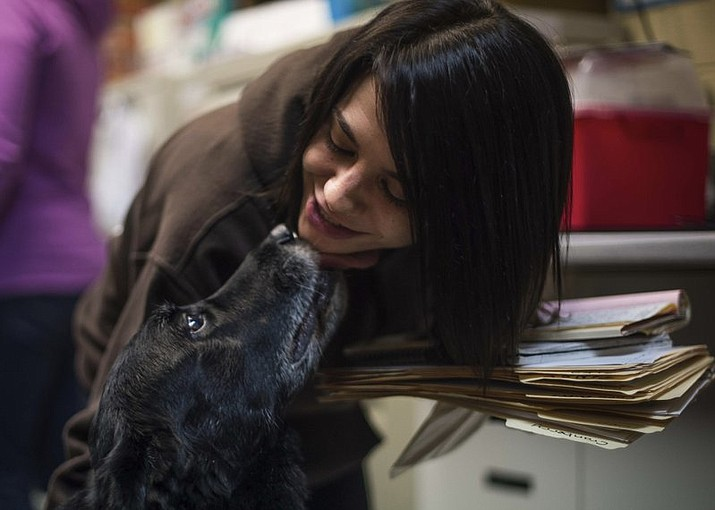 Jody Berisko, an employee at Animal Protectors of Allegheny Valley gets a kiss from Abby on Jan. 30, 2018. A Pennsylvania family has been reunited with its dog 10 years after the dog went missing. Debra Suierveld and her family assumed their dog Abby had died after she ran away in 2008 from their home in Apollo. Decade-old sadness turned to joy Saturday when Suierveld received word someone had found the dog. (Nate Smallwood/Pittsburgh Tribune-Review via AP)