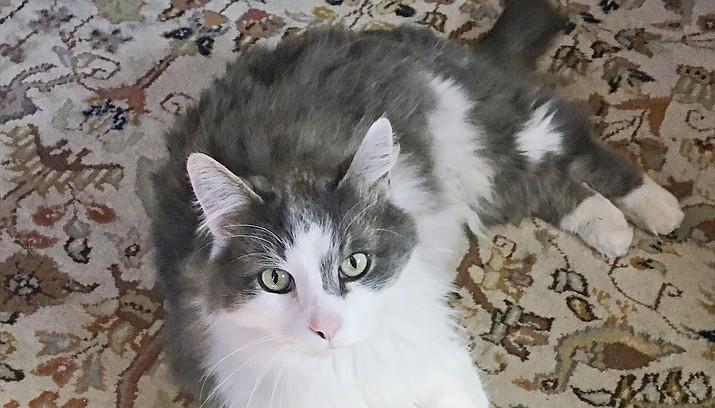 Jupiter, a cat