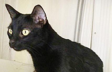 Nibbles, a cat