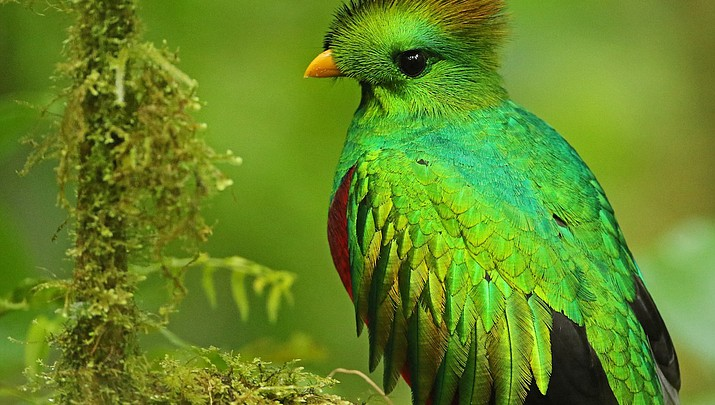Birding: Bucket list birding in Costa Rica