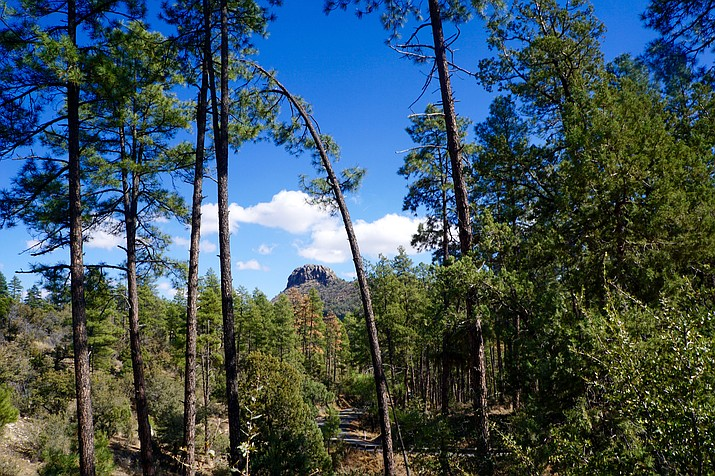 A view of Thumb Butte, above, through towering ponderosa pines is among the main perks of a hike near the White Rock parking area west of Prescott. The parking lot is located west of the main Thumb Butte trailhead on Thumb Butte Road.