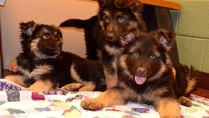 Humane Society of Sedona in need of puppy food