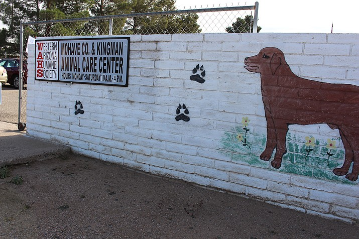 Some 15 dogs were taken to Western Arizona Humane Society shelter in Kingman after Jacquelyn Chevalier was cited for operating an unlicensed kennel in Golden Valley. The Arizona Attorney General was asked to investigate the county's ordinances regarding kennel licenses.