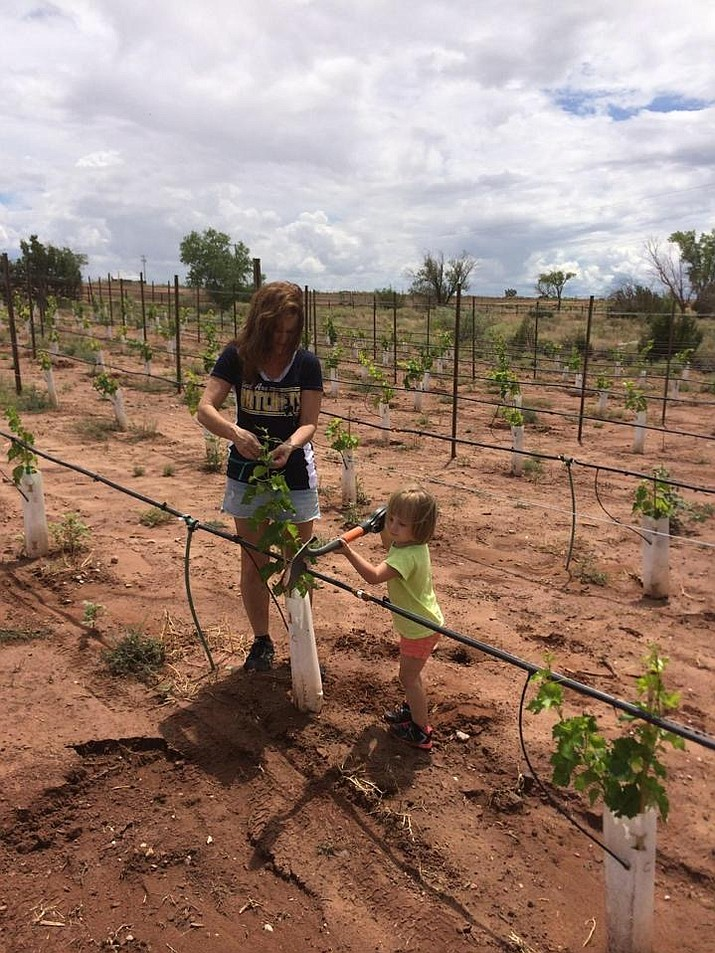 D'Alene Moore gets a helping hand from granddaughter Kaylee with the grapevines at the Mogollon Vineyard near Snowflake. The Moores have applied for a use permit to move their vineyard and winery to Dewey-Humboldt. (Mogollon Vineyard/Courtesy)