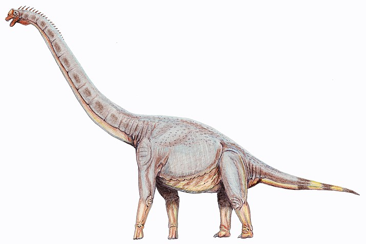 Sonorasaurus. (Courtesy)