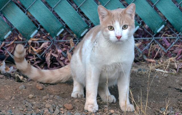 Pet focus:  Pinto — Catty Shack