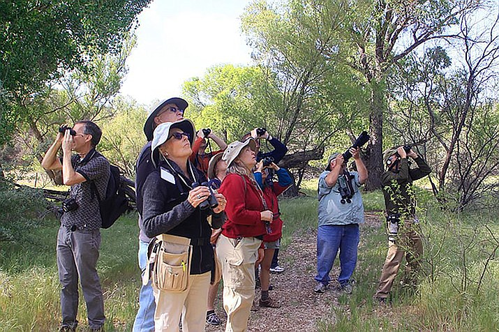 The Verde Valley Birding and Nature Festival takes place April 26-29, at Dead Horse Ranch State Park in the Verde Valley. (Friends of the Verde River)