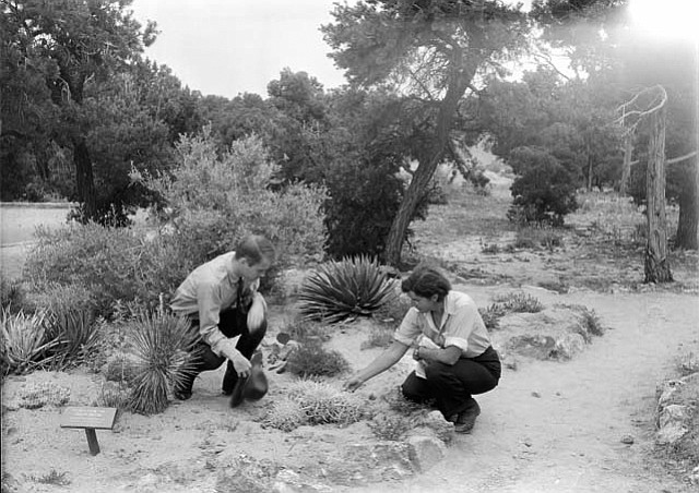 PARK NATURALIST EDWIN MCKEE WITH BOTANIST DR. ELZADA CLOVER EXAMINING PLANTS IN THE NATIVE PLANT GARDEN BY YAVAPAI OBSERVATION STATION. 12 JULY 1938 NPS PHOTO.