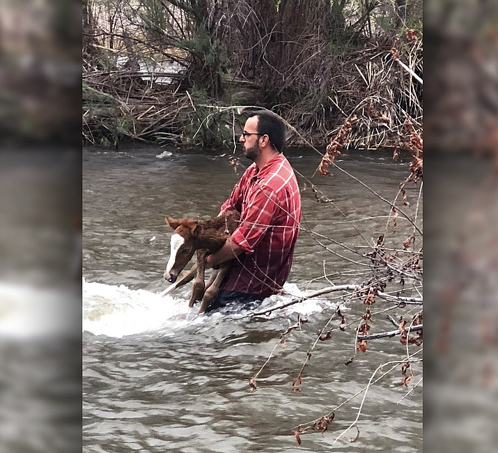 Pictured is Ryan Schultz holding a foal in the Salt River on Thursday, March 22, 2018, in Mesa, Ariz. Ryan and his wife, Bren Schultz, who volunteer with Salt River Wild Horse Management Group, were trying to save the foal from drowning when all three got stuck. (Simone Netherlands/Salt River Wild Horse Management Group)