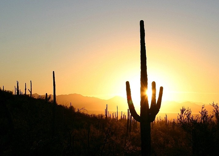 Saguaro National Park. (Photo/NPS SAGU)