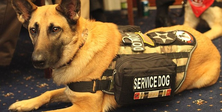 Under legislation in the Legislature people with fake service animals could face fines. (Courier file)