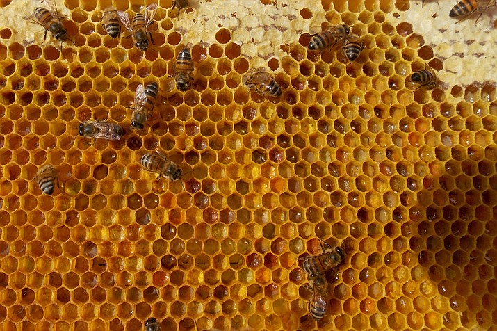 Bees in a Prescott-area hive check their honey and pollen stores after a strange winter. They have likely been confused by lack of precipitation this winter and spring, in addition to warmer weather followed by unexpected cold snaps. (Tim Wiederaenders/Courier)