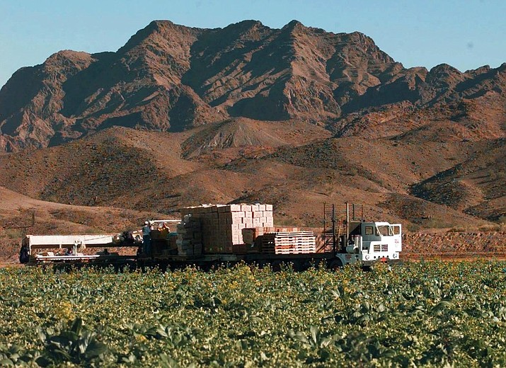 In this file photo lettuce is harvested at a farm in Wellton, Ariz., east of Yuma. The Centers for Disease Control is expanding a warning about contaminated lettuce from Arizona that has now sickened dozens of people in several states. (AP Photo/Jeff Robbins, file)