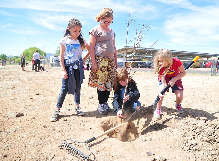 Autumn Jeffers, Ryleigh Hunsley, Addie Lohman and Trinity Harris plant one of the 40 fruit trees. The Fruit Trees Plantation Foundation donated apricot, plum, peach, apple and pear trees to Coyote Springs Elementary School in Prescott Valley Tuesday, April 24, 2018. (Les Stukenberg/Tribune)