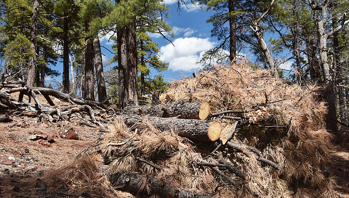 U.S. Forest Service to hold public meeting May 2 to address seasonal outlook for Kaibab Forest