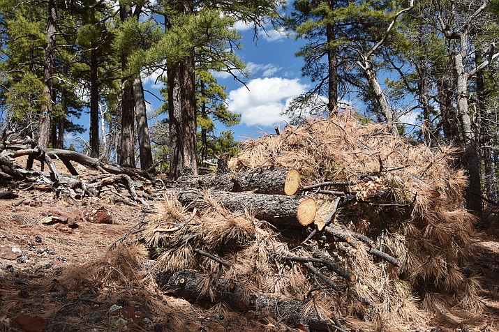 Slash resulting from forest restoration efforts on Bill Williams Mountain on the Willams Ranger District. (U.S.F.S, Kaibab National Forest)