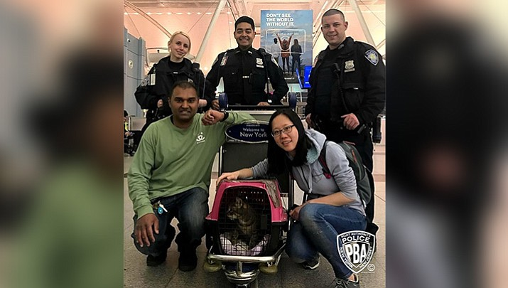 A lost cat, Pepper, has been found after more than a week of hiding at JFK Airport in New York.  (Port Authority Police Department)