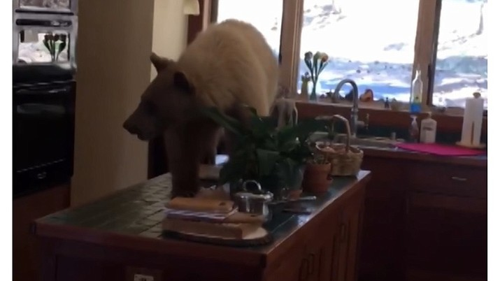 A hungry bear broke into a California home and snacked on bread and fruit before sheriff's deputies were able to chase it away. (Placer County Sheriff's Office)