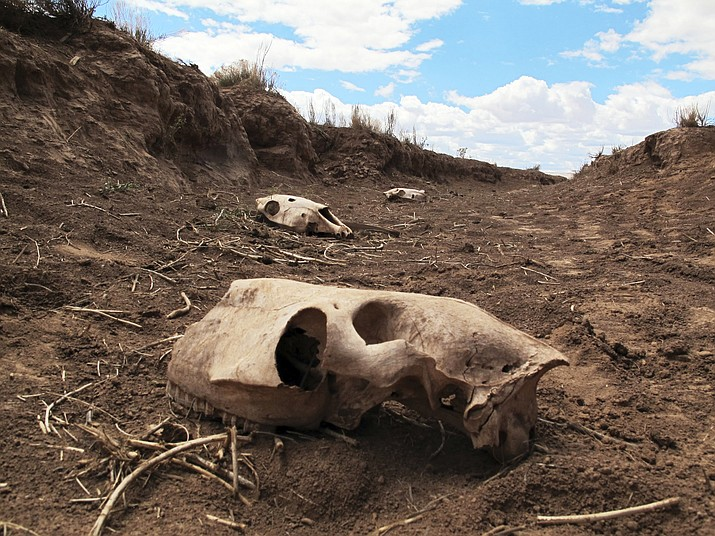 Skeletal remains of animals lie in a ravine adjacent to a watering hole near Cameron where dozens of horses were discovered dead last week. (AP Photo/Felicia Fonseca)