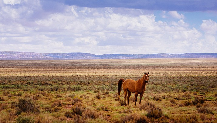 Nation's feral horse problem brought to forefront after recent death of nearly 200 horses