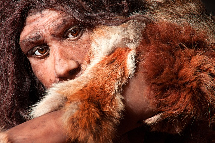 Neanderthals, like this reconstructed model, are a group of archaic humans who emerged at least 200,000 years ago during the Pleistocene Epoch and were replaced or assimilated by early modern human populations between 35,000 and 24,000 years ago. (Adobe Images)