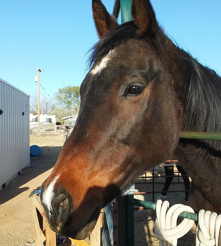 Allie the horse, taken care of at Blue Moon Rescue and Sanctuary. (Candy Rotering/Courtesy)
