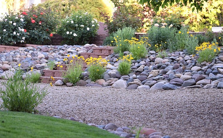 Coreopsis have happily seeded themselves below the roses and among the river rocks in the terraced landscape at Renie and Ed Collier's home, 1653 Cedarwood Drive, Prescott. The Collier's have won the Alta Vista Garden Club's Garden of the Month designation for June 2018. (Stephen Brubaker/Courtesy Alta Vista Garden Club)
