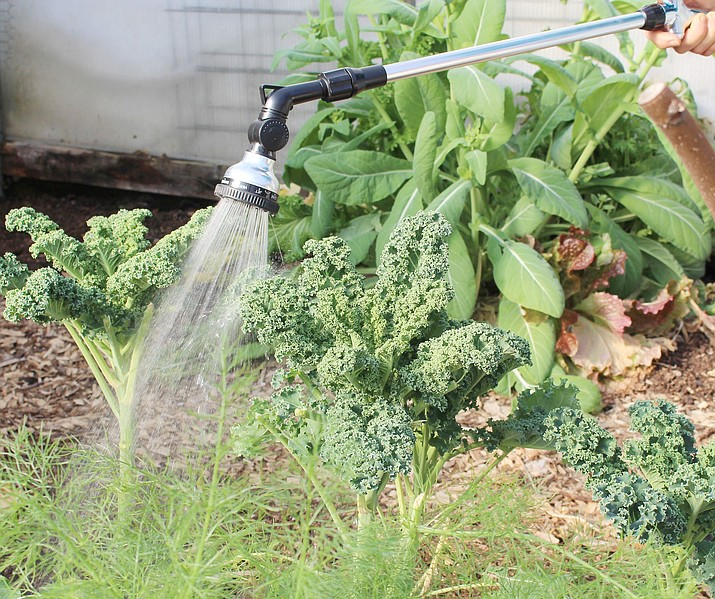 Watering with a water wand is not a very effective way to water in-ground plants, unless you're willing to hold still, training the water in one spot, for a very long time. (Lee Reich via AP)