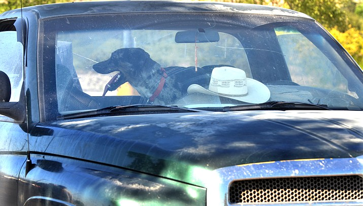 Editorial: No real bite in laws designed to protect animals from being left in locked cars