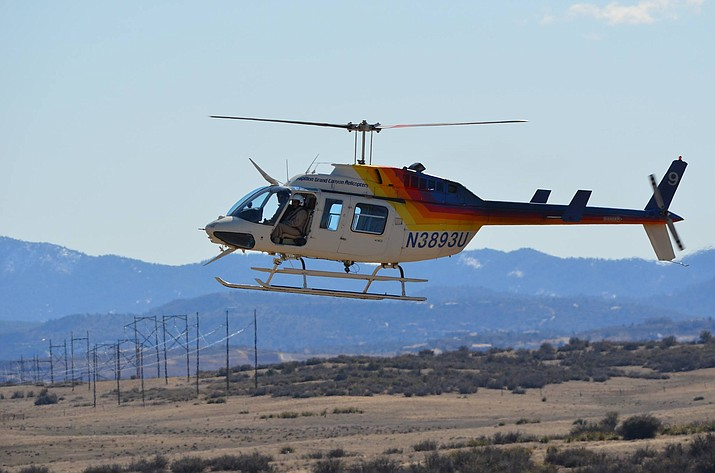 Arizona Game and Fish Department captured 60 elk in January utilizing helicopter wildlife captures. (Photo by AZGFD)