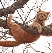 Cat in a tree? Who you gonna call? photo