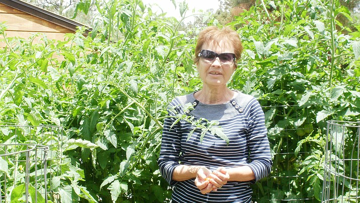 'Determinate' and 'Indeterminate' tomato varieties?