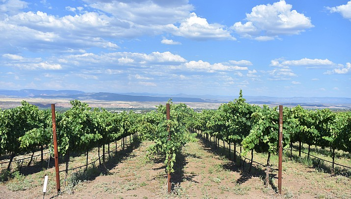 Local winemakers spearhead Verde Valley American Viticulture Area