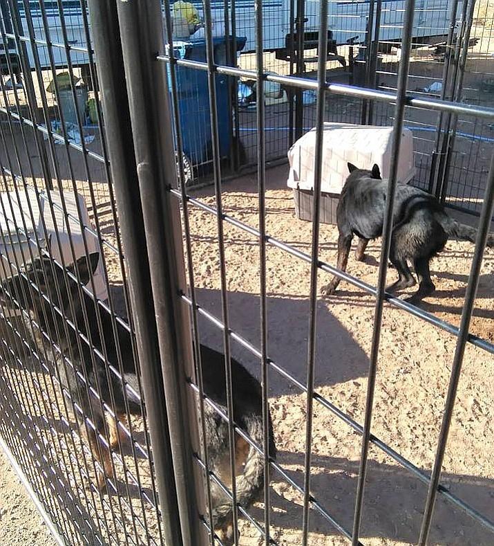 Supervisors To Review Ordinances For Dog Kennels Kingman
