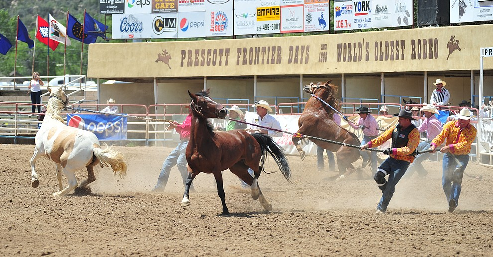 Wild horse racing during the final performance of the 2018 Prescott Frontier Days Rodeo Wednesday, July 4, 2018. (Les Stukenberg/Courier)